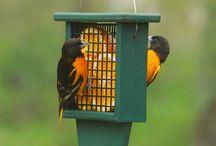 Kŕmidlá, napájadlá a búdky pre vtáky