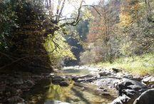 Bosque de Chate o de La Pardina del Señor / Bosques