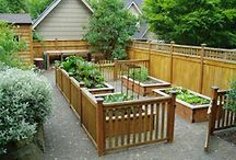 Raised Bed & Container Gardening  / Desperately seeking my green thumb.