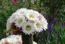 Home gardens / Love gardens