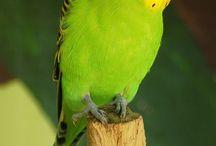 Parrots lover ❤️