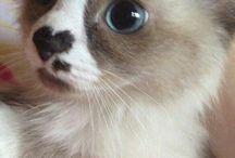 Alexa leg cukib állatos album
