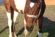 Ella / Horse