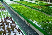 Commercial / Commerical aquaponic systems