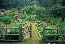 The Veggie Garden / Everything from how-to grow veggies to stylish yet functional ways to lay your veggie garden