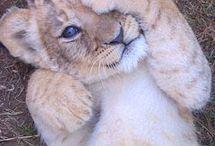 I love animals  :) / by Nancy Jasgur