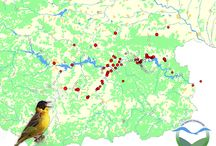 Bird counts Bulgaria / In this project a new monitoring method is tested. The method can be applied by bird watchers during their holiday / bird trip. This opens the way to collect bird data in areas where local bird watchers are scarse. See also http://pc.trektellen.nl