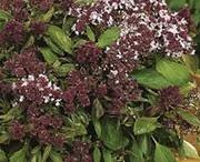 Herbs and edible garden