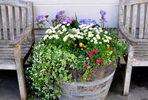 Outdoor Ideas / by Laura Snider