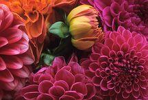 Botanical wonder