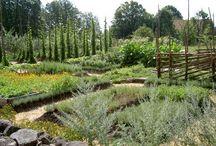 Trädgårdar/gardens