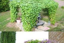 Haveplanter