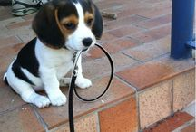Puppy love / by Debbie Goodwin