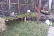 Rabbit and Chicken Runs