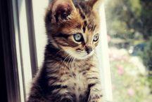 cats koty