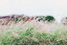 Photography / by Kya O