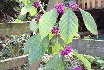 Planten / Bloemen Fotografie