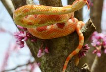 Kígyók, siklók