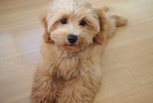 Puppy Love / by Michelle Bertucci
