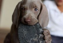 Our future pup