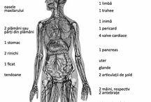 Sanatate&Medicina