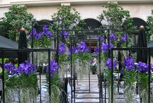 Marble Courtyard / Outdoor terrace of the Four Seasons Hotel George V Paris