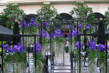 Hotel / Hotel Blumen Dekoration Www.blumenmeister.com
