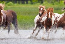 horses / by Stephanie Clemens
