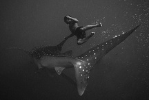 SHARKS / The most fascinating creatures on Earth / by Toi Brownstone