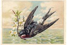 Vintage illustrations... Birds