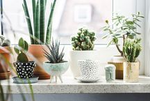 -{ plants indoors & in pots }-