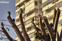 Parque del Oeste, Málaga. / El maravilloso Parque del Oeste te está esperando, para que disfrutes de un paseo por sus instalaciones. ¡Todo un placer!