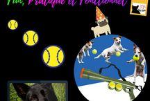 Jouets pour chiens / Dans ce tableau, vous trouverez des images ou vidéos des  jouets pour chiens disponibles sur la Boutique d'accessoires pour chien Chimey's Paradise.