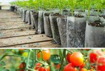Epsom Salt ideas for gardening