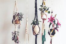 plants &