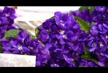 BLEU ... Chambres d'hôtes & gîtes Fleurs de Soleil France / Signification de la couleur bleu … Le bleu représente la paix, la sérénité, le calme ...