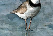birds-images
