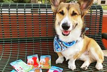 Pet Qwerks Product Reviews / We love pet parents posting the pictures of pets enjoying Pet Qwerks products! If you have photos to share, please tag us @petqwerks.