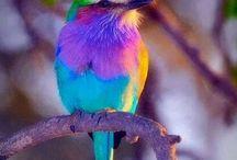 Pretty birds