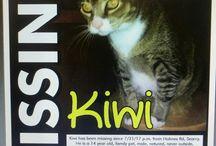 Please Help Find Kiwi / Kiwi Missing