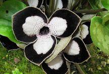 surprenante nature / des fleurs étranges et magnifiques à la fois