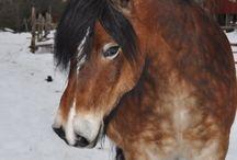 Hästar / Favorit hästar.