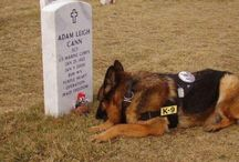 Dogs n soldiers