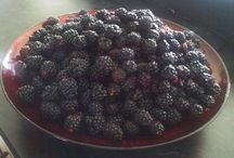 Milburn Orchard's Blackberries / UPICK Blackberry Adventure is perfect for the whole family!