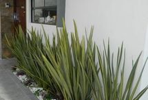 Image de jardin
