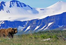 Alaska / Join us in coastal Alaska from Katmai to Kodiak to Denali National Park to get close encounters with mighty Alaskan Brown Bears and other wildlife. Views our tours here- http://bit.ly/1gAnbcS