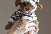 Doggy Fashion Idea