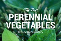 Perennial vegies