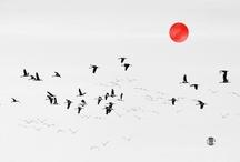 Nihoness / by Tyler Mccoy