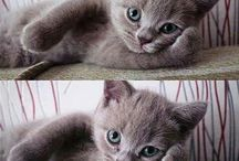 Lovely cats♡